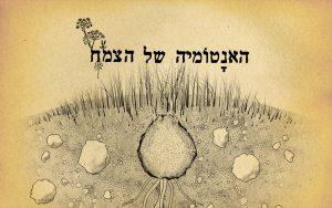 מיתוג עסקי - עיצוב לוגו - האנטומיה של הצמח